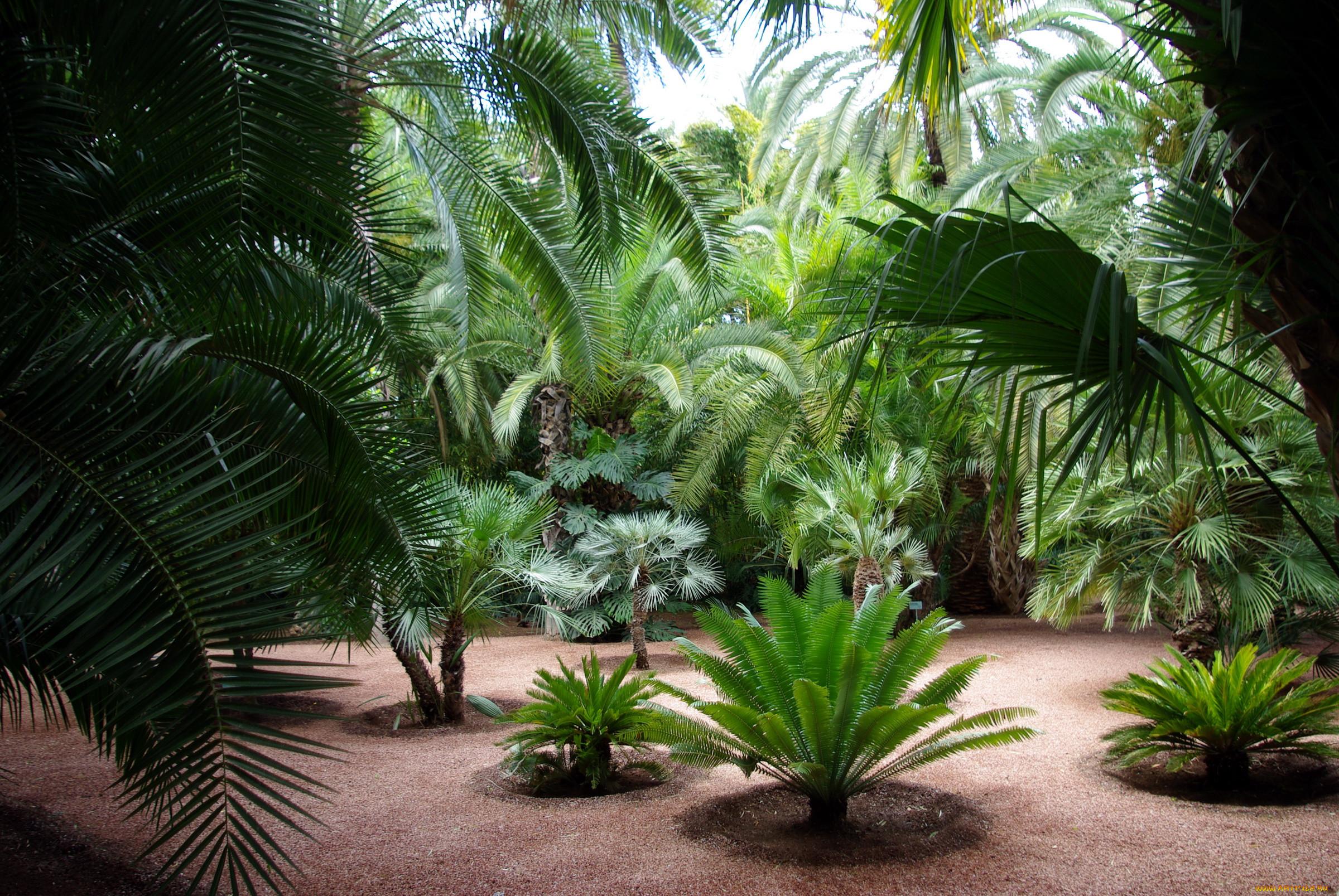 рецептуре следовали, фото пальма тропики всегда нам